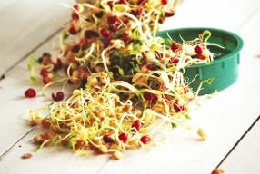 Daigintos maistui sėklos – skanu tai, kas sveika